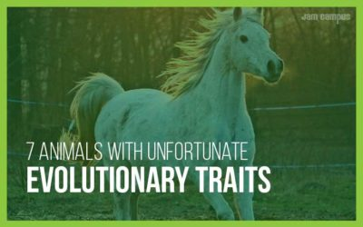 7 Animals With Unfortunate Evolutionary Traits