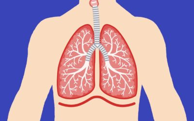 Respiratory System Song